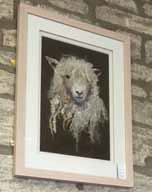 Barbara Shaw's Cotswold Sheep